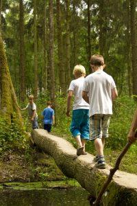foto Donkergroen: kinderen lopen over boomstam